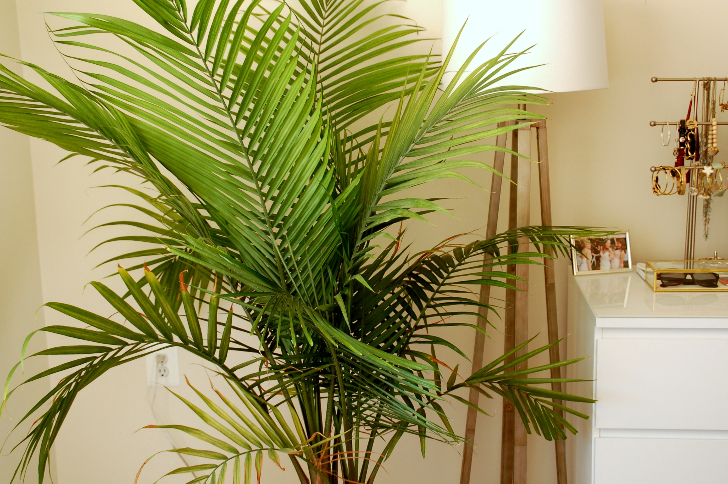 Are Indoor Plants Beneficial for Health?