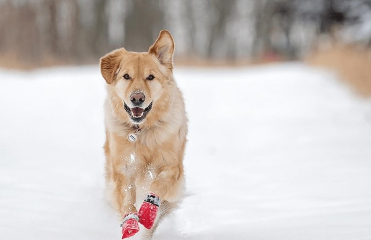Caring for your pet's paws in winter