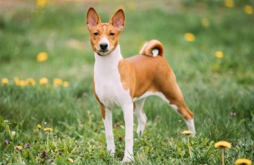 Fanconi Syndrome In Dogs- Overview