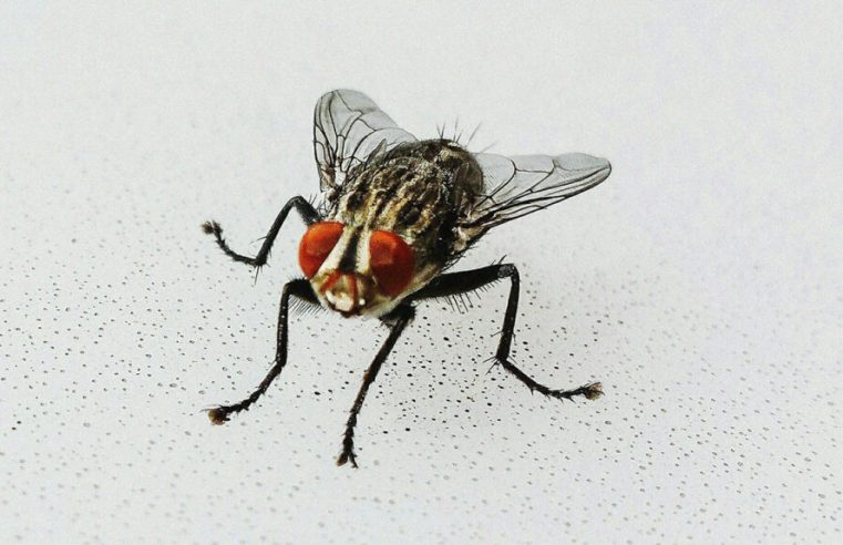 Some Tips to Prevent Flies Entering Your Premises